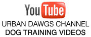 Modern Dog Training on YouTube